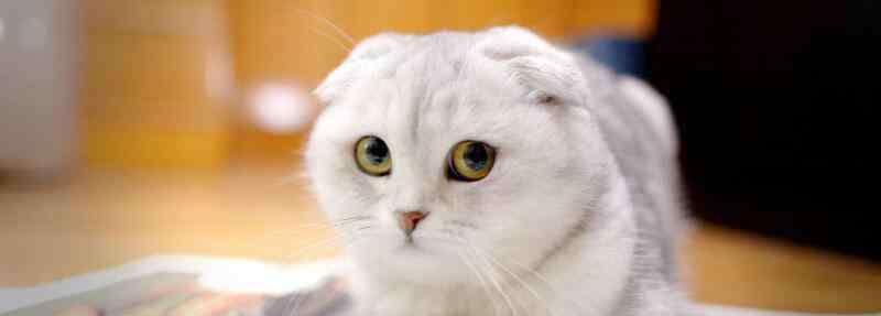 临产前的症状 猫生产前的征兆