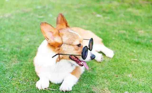 适合楼房养的狗排名 楼房最适合养的狗排名