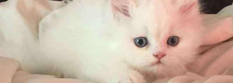 猫鼻支的早期症状 猫鼻支的症状