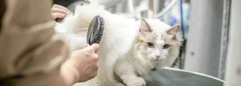 猫咪口气臭怎么去除 猫有口臭怎么去除,如何改善猫咪口臭