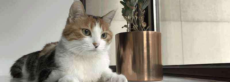 猫一胎生几只 猫咪第一胎一般生几只