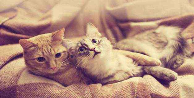 猫咪毛囊炎 猫毛囊炎用什么药