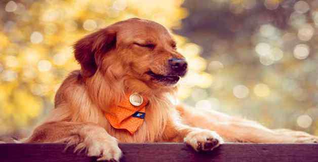 犬瘟热症状 狗瘟有什么症状