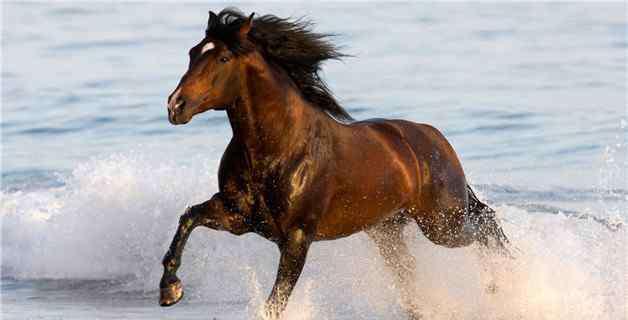 白马非马的通俗意思 白马非马的通俗意思是什么