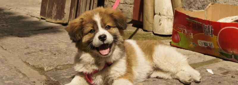 狗狗能吃花生吗 狗狗能吃花生吗