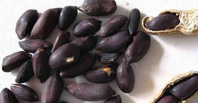 黑皮花生的功效与作用 吃黑花生的禁忌有哪些