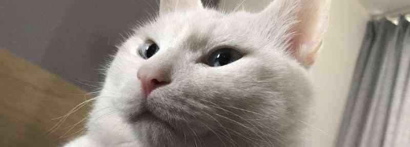 猫咪吐了半消化的猫粮 猫咪呕吐没消化的猫粮