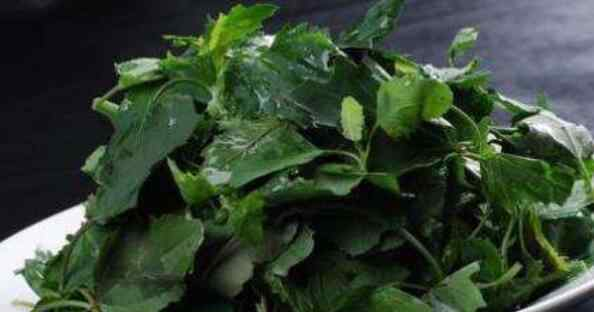 灰菜 灰菜的功效与作用 灰菜的食用方法