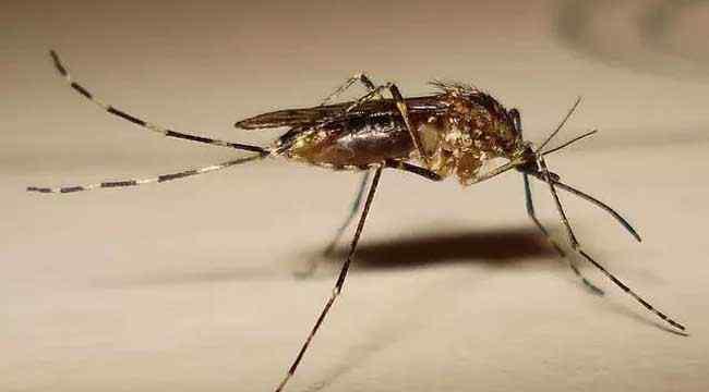 家里蚊子多怎么办 屋里有蚊子怎么办才好?
