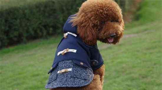 狗衣服 最简单的狗狗衣服做法,手把手教你制作精美狗衣