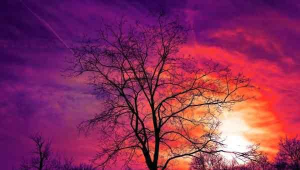 季节性过敏 为什么季节性过敏会让你感到困倦?