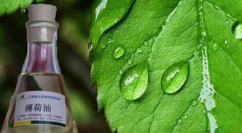 薄荷油的功效与作用 薄荷油的功效与作用