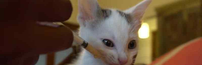 小猫吃什么食物 小猫喜欢吃什么食物