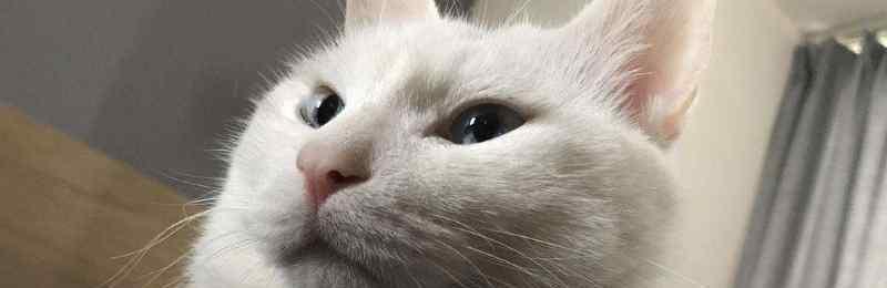猫咪吐了没消化的猫粮 猫咪呕吐没消化的猫粮
