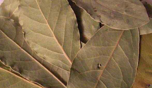 香叶在调料中的作用 香叶的功效与作用 香叶的吃法