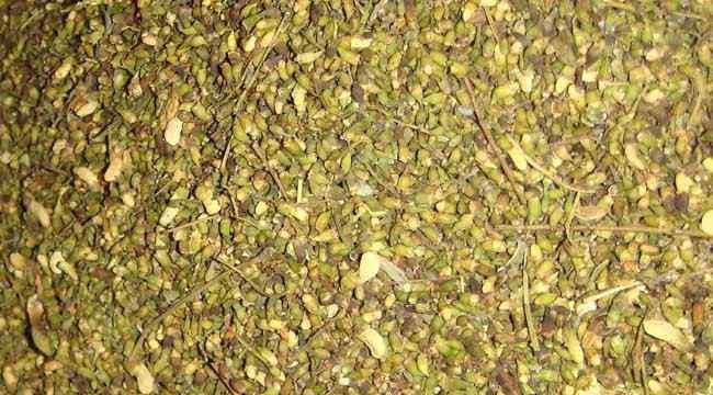槐米的功效与作用 槐米的功效与作用