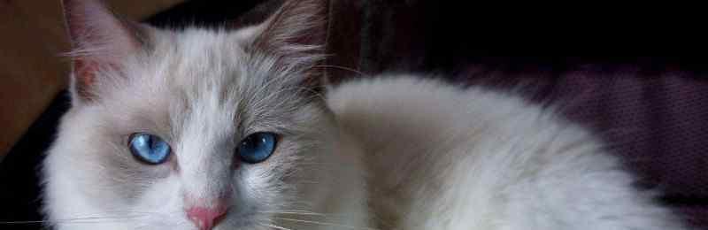 小猫怎么看公母 怎么分辨猫的公母