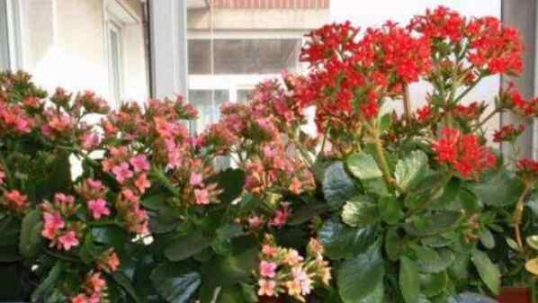 家里千万不能养的6种花 家里千万不能养的6种花 哪些花不能养殖在家里