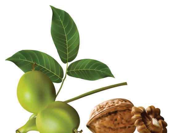 核桃的营养价值及功效与作用 核桃的营养价值和功效作用