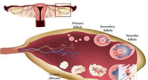排卵时候有啥症状 排卵时候有啥症状