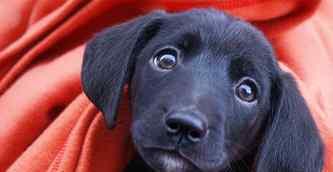 小狗吃多了怎么办 狗狗吃多了怎么办?合理喂食避免消化不良