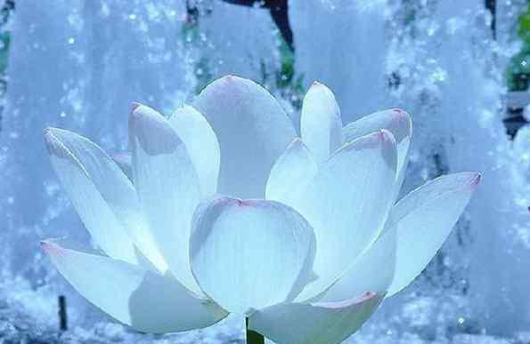 什么人最不怕冷 植物之最:世界上最不怕冷的植物是谁?