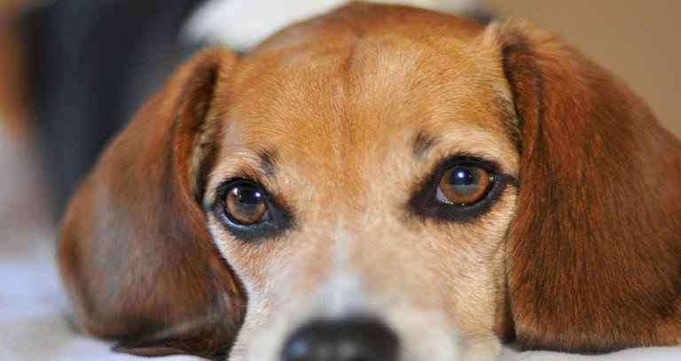 狗死后为什么不能碰 狗狗死后为什么不能埋 狗狗死后怎么安葬?