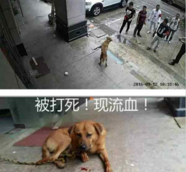 机场回应打狗事件 机场回应打狗事件,受伤这一细节却没提到!