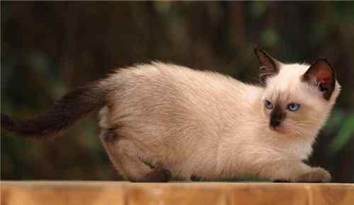 猫咪肾衰 猫咪慢性肾衰竭无法痊愈的原因