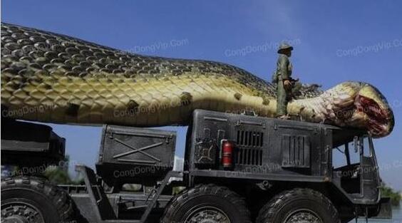 【震惊】女子被巨蟒勒颈身亡 世界上最大的蛇500米吃大象图片大的吓人