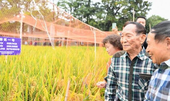 【热议】水稻亩产1365公斤 这产量真是惊人的优秀