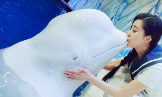 挑战者联盟第二季范冰冰献亲吻白鲸 网友:白鲸吃人吗?