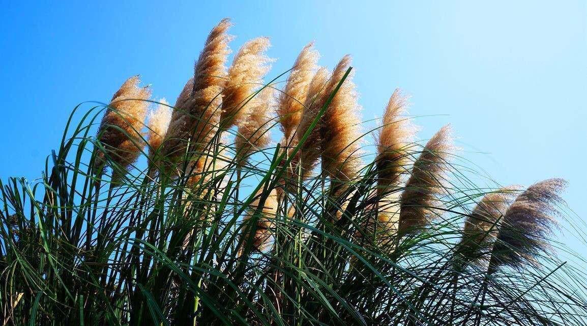 湿地有哪些植物可以生长 生活环境