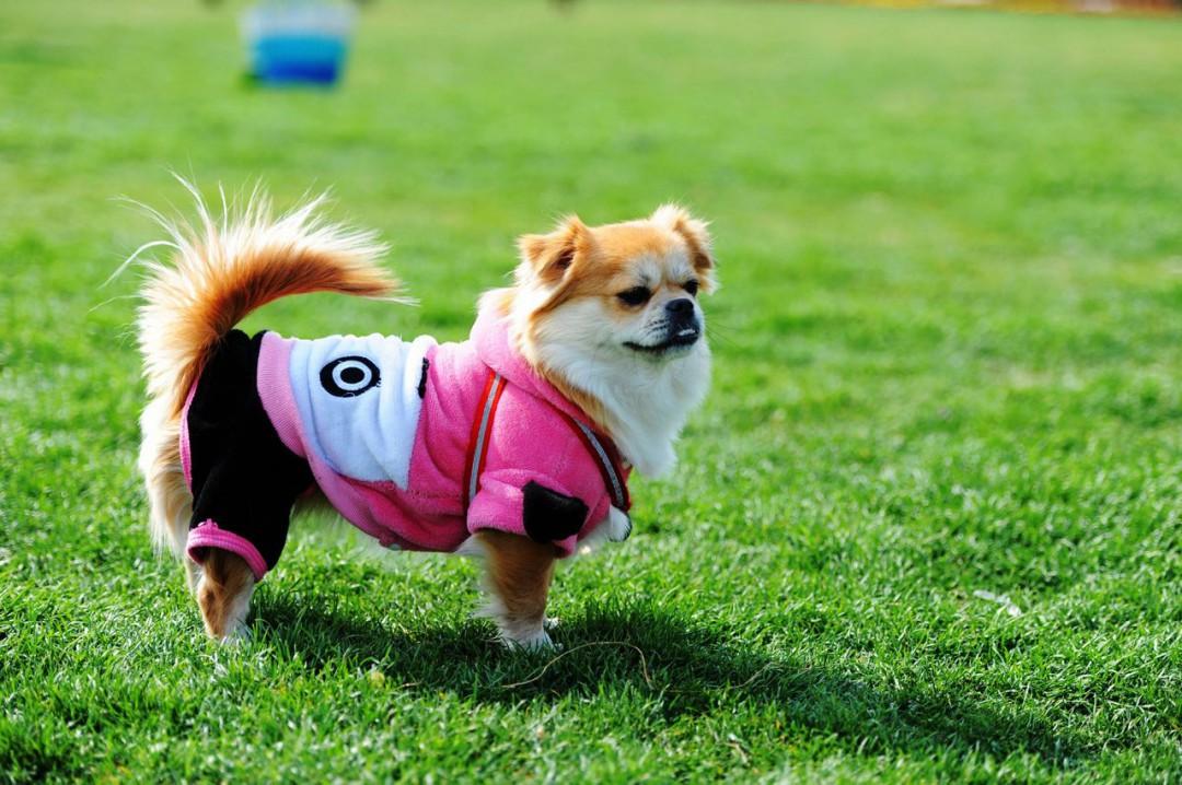 狗的特征有哪些 狗的特征简述