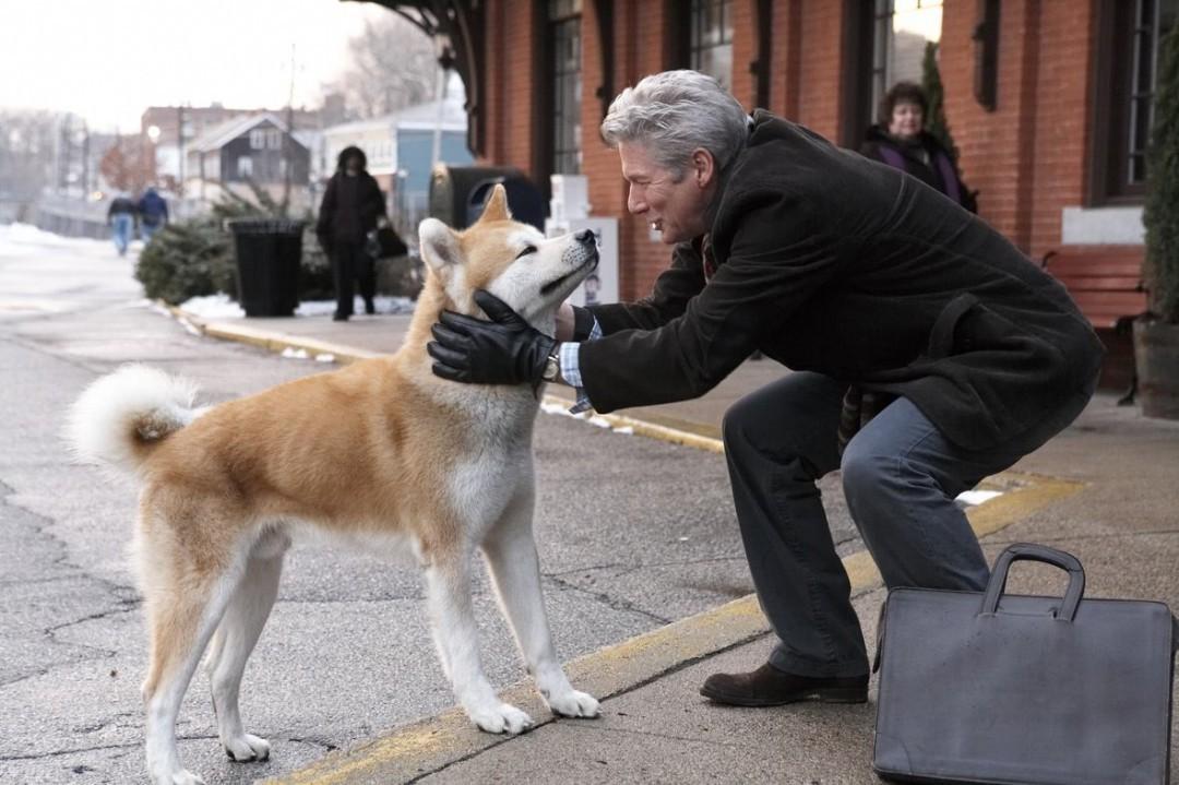 关于人和动物的感人故事 推荐一篇人和动物之间的感人故事