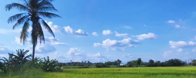 热带种植园农业的特点 一起了解下