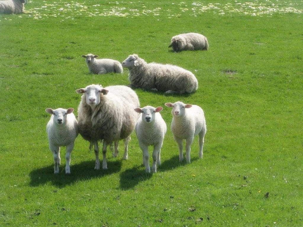 骑在羊背上的国家是哪个 为什么被称为骑在羊背上的国家