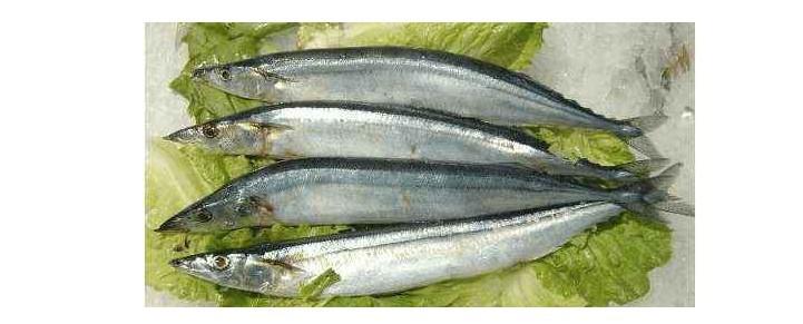 刀鱼可以养殖吗 刀鱼可以养殖吗和原因