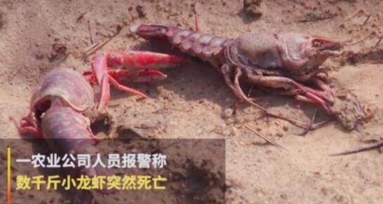 【震惊了】熊孩子毒死小龙虾 熊孩子为什么要毒死小龙虾终于真相了