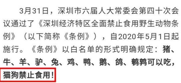 【资讯】深圳立法禁食猫狗 现代人类文明体现