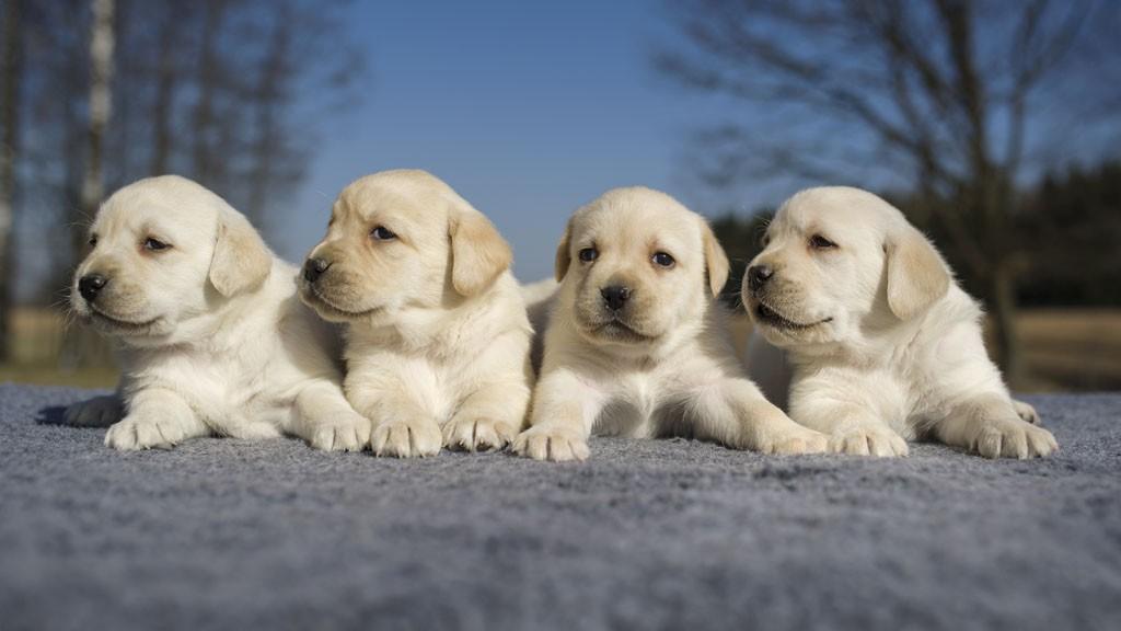 做梦梦见狗什么意思 做梦梦见狗预示着什么