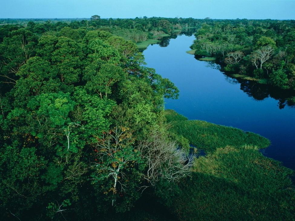热带雨林植物有哪些 热带雨林有什么植物
