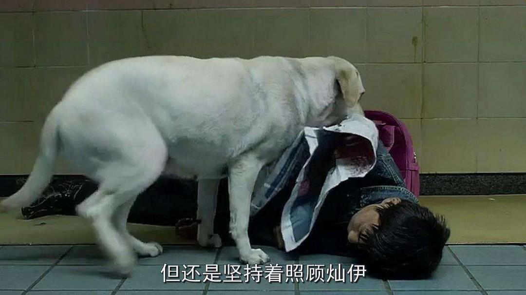 狗的感人故事 8个狗狗的感人故事