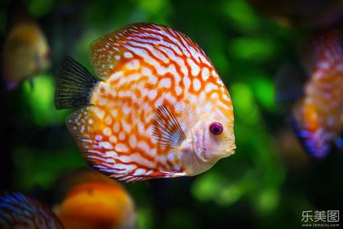 海里的动物有哪些 海里的动物都有什么