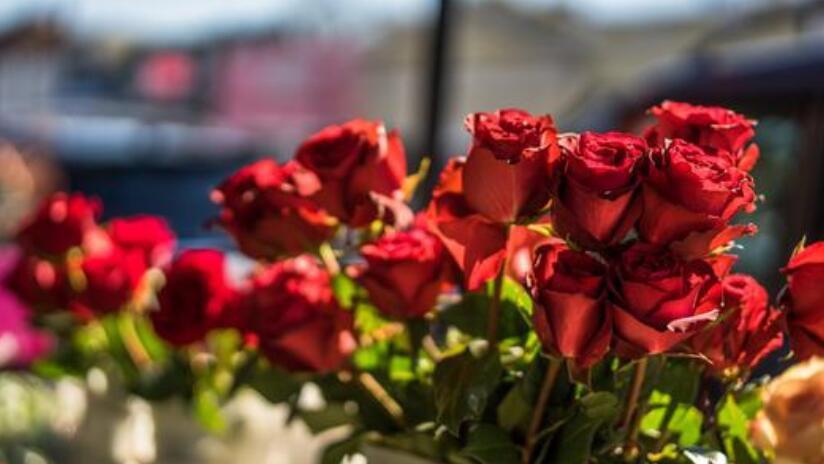 11朵红玫瑰花花语是什么 11朵红玫瑰花象征着什么