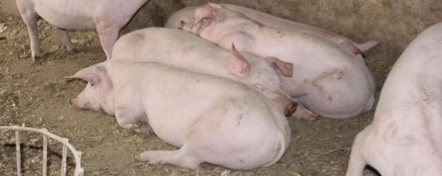 养猪场的废水处理 处理方法如下