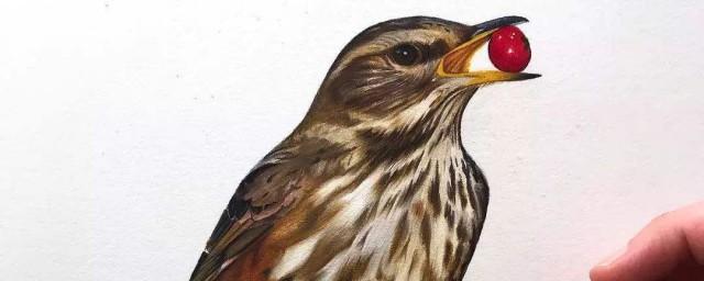 鸟的笔顺怎么写 鸟的释义