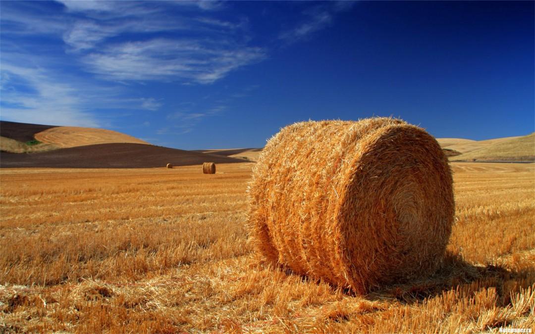 秋天丰收的农作物有什么 秋天农作物成熟很重要的一部分因素是什么