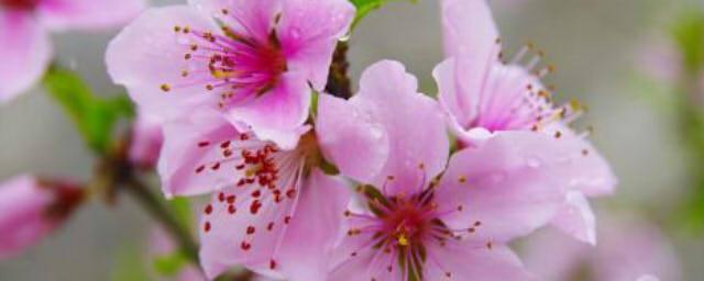描写春夏秋冬的古诗 描写春夏秋冬的古诗分别有哪些