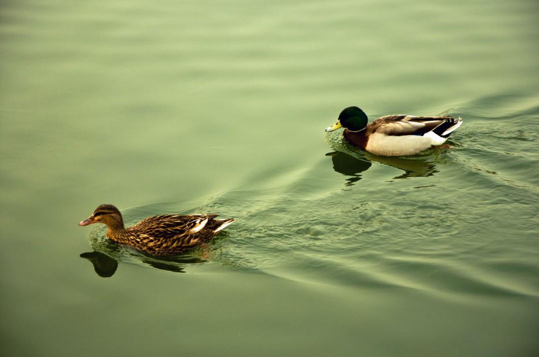 什么春江水暖鸭先知 这是什么意思